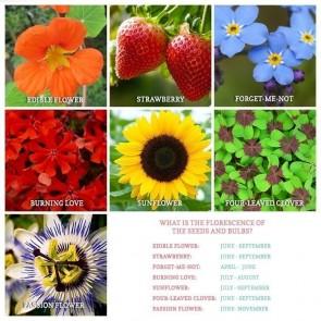 Flowery Flower Pots