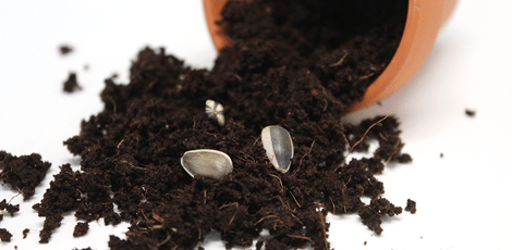 flower-pot-potting-soil